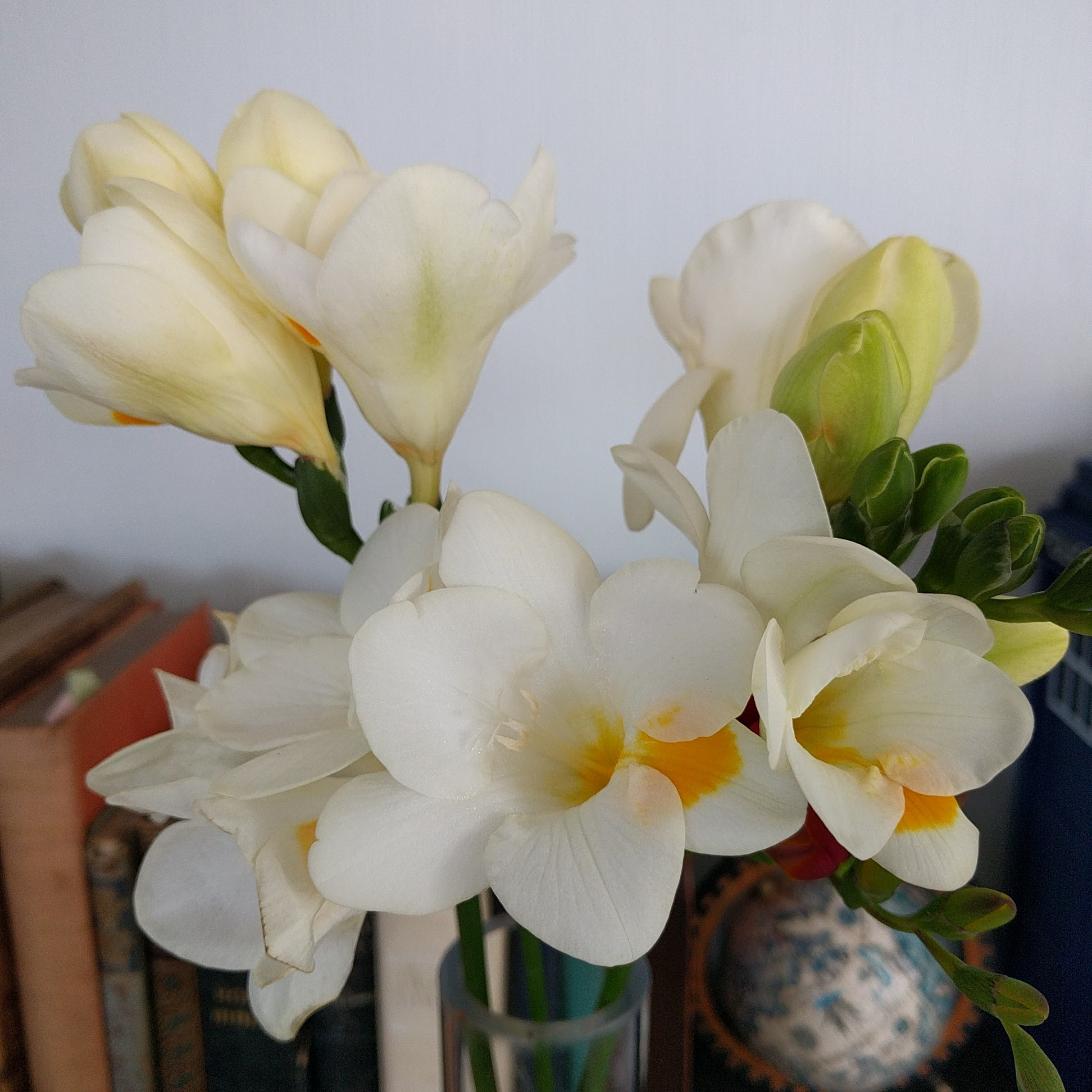 Spring freesias from the garden